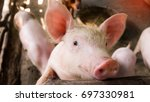close up picture of a small... | Shutterstock . vector #697330981