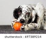 Dog Gnaws Toy
