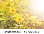 yellow flowers in the garden... | Shutterstock . vector #697393519