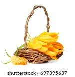 yellow zucchini flowers in a... | Shutterstock . vector #697395637