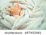 Stock photo little red kitten the kitten lies on the fluffy carpet at home little kitten sleeps close up of 697452481