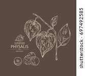 background with physalis  plant ...   Shutterstock .eps vector #697492585