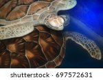 green turtle swims above in... | Shutterstock . vector #697572631