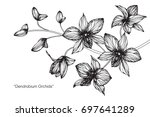 hand drawn and sketch orchid... | Shutterstock .eps vector #697641289