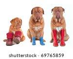 Three Dogue De Bordeaux Puppies ...