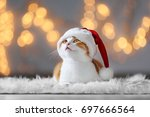 Cute Cat In Santa Claus Hat...