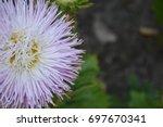 Aster Garden. White. Needle...