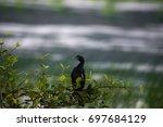 A Little Cormorant Bird Perche...