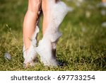 youth at a foamy party on the... | Shutterstock . vector #697733254
