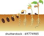 plant growing vector... | Shutterstock .eps vector #69774985