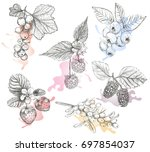 sketch berries set vector... | Shutterstock .eps vector #697854037