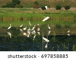 The Egret Of The Hyeongsan...