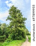 Small photo of Black Alder tree along channel and unpaved footpath