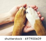 dog paws and human hand close... | Shutterstock . vector #697900609