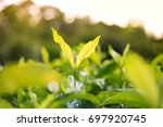 growing tree and green leaf... | Shutterstock . vector #697920745