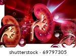 digital illustration of  kidney ... | Shutterstock . vector #69797305