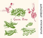 green peas and pea pod close up ... | Shutterstock .eps vector #698029699