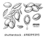 argan drawing. isolated vintage ... | Shutterstock . vector #698099395