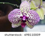 Orchid Flower Tropical Garden Close - Fine Art prints