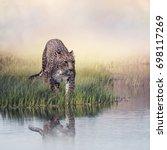 leopard in the grass near pond | Shutterstock . vector #698117269