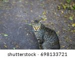 Nice Tabby Cat Portrait. Cat I...