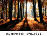 colorful indian summer forest - stock photo