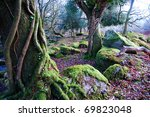 Mossy Tress Strangled By Ivy In ...