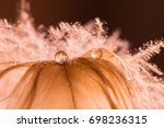 A Drop Of Water Dew On A Fluff...