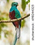 flying resplendent quetzal ...   Shutterstock . vector #698244325