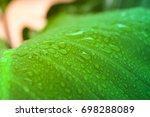 closeup water rain drop on leaf ... | Shutterstock . vector #698288089