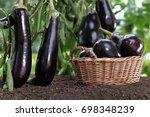 Basket Full Of Eggplants On Th...