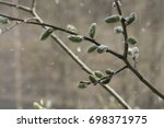 snowy branch with buds... | Shutterstock . vector #698371975
