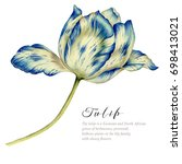 watercolor vintage tulip. blue... | Shutterstock . vector #698413021