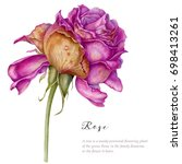 watercolor hand painted...   Shutterstock . vector #698413261
