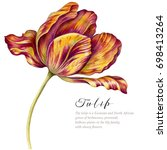 Watercolor Vintage Tulip. Red...