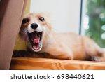 a fox | Shutterstock . vector #698440621