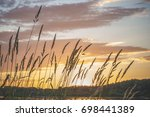 grass with spikelets on the... | Shutterstock . vector #698441389