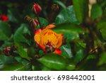 bright rose | Shutterstock . vector #698442001