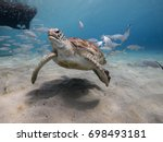 Amazing Green Sea Turtle In...