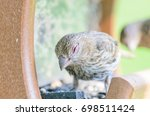Wild Female House Finch In At ...