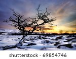Tree In Snow With Dramatic Sky...