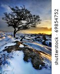 Lone Tree In Snow At Sunset