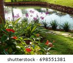 Colorful Flowers Growing By The ...