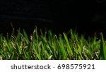 grass texture in black...   Shutterstock . vector #698575921