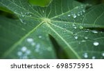 morning dew in the green leaf   Shutterstock . vector #698575951