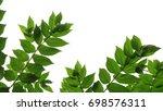 green leaves in white background   Shutterstock . vector #698576311