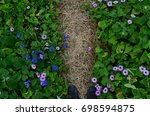 wild flowers along the hiking... | Shutterstock . vector #698594875