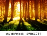 Stock photo colorful foggy mystical forest at evening 69861754
