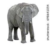 Stock photo elephant isolated on white background 698641054