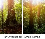 large beautiful trees in the... | Shutterstock . vector #698642965